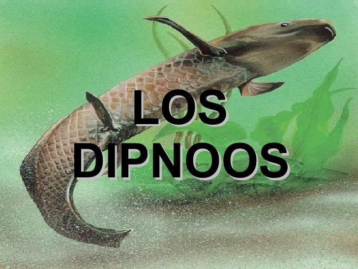 LOS DIPNOOS