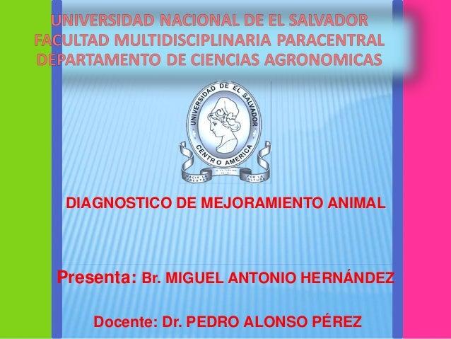 DIAGNOSTICO DE MEJORAMIENTO ANIMAL  Presenta: Br. MIGUEL ANTONIO HERNÁNDEZ  Docente: Dr. PEDRO ALONSO PÉREZ