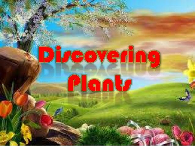 Discovering plant-quiz