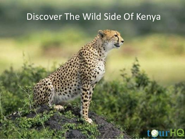 Discover The Wild Side Of Kenya