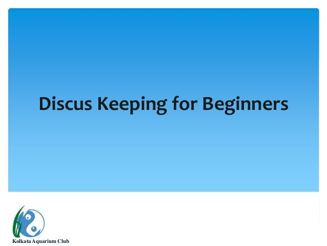 Discus keeping for beginners
