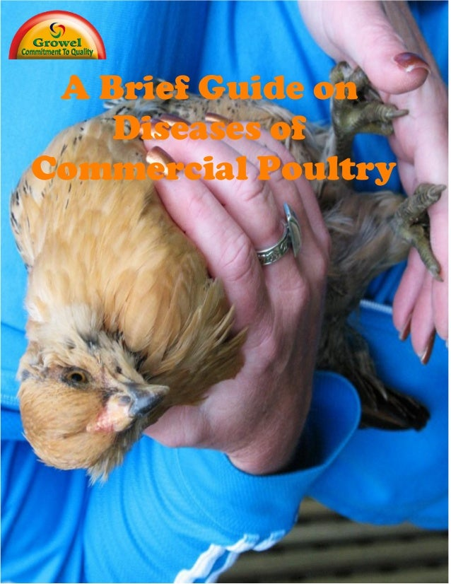 Diseases commercial poultry