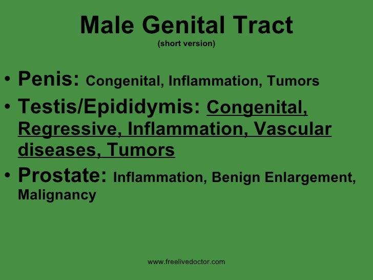 Male Genital Tract (short version) <ul><li>Penis:  Congenital, Inflammation, Tumors </li></ul><ul><li>Testis/Epididymis:  ...
