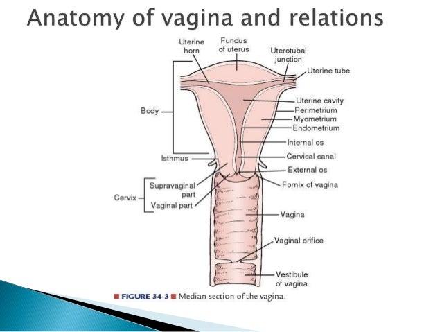 five v operasi vagina.