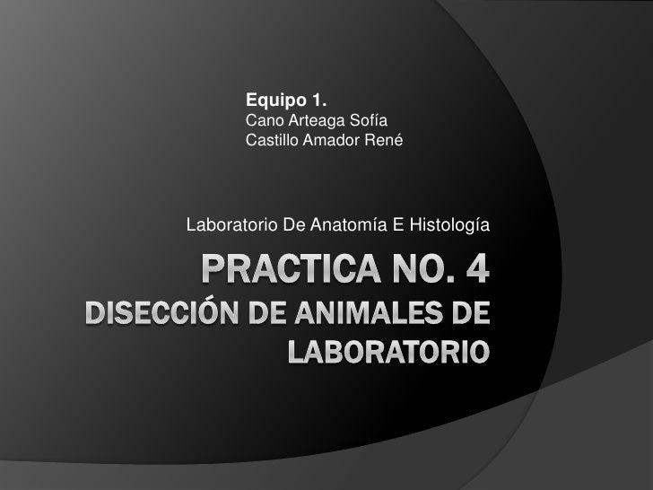 Practica no. 4disección de animales de laboratorio<br />Laboratorio De Anatomía E Histología<br />Equipo 1.<br />Cano Arte...