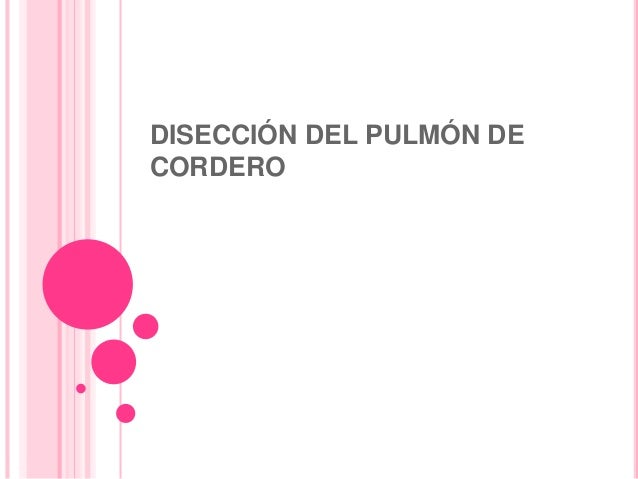 DISECCIÓN DEL PULMÓN DE CORDERO
