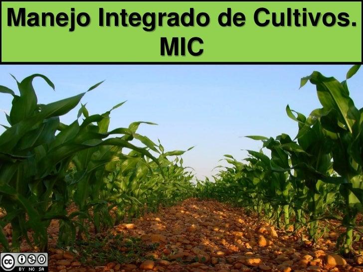 Manejo Integrado de Cultivos.            MIC
