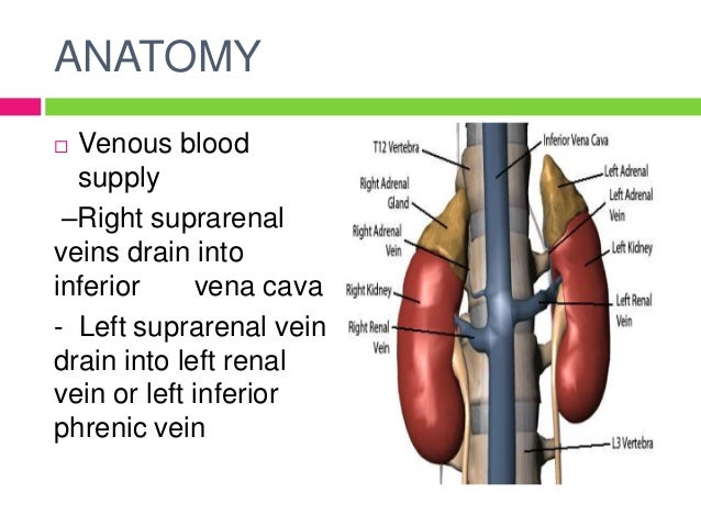 Vessels Of Upper Limb besides 13517487 additionally 8647018 also Disorders Of Adrenal Glan Dby Aina 51174336 moreover . on the radial vein