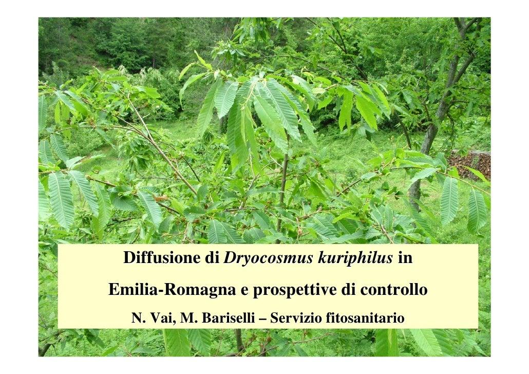 Diffusione di Dryocosmus kuriphilus in Emilia-Romagna e prospettive di controllo   N. Vai, M. Bariselli – Servizio fitosan...