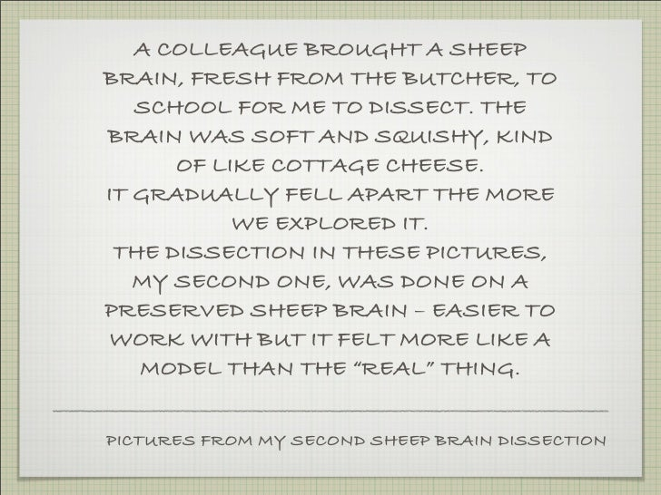 A COLLEAGUE BROUGHT A SHEEP BRAIN, FRESH FROM THE BUTCHER, TO    SCHOOL FOR ME TO DISSECT. THE BRAIN WAS SOFT AND SQUISHY,...