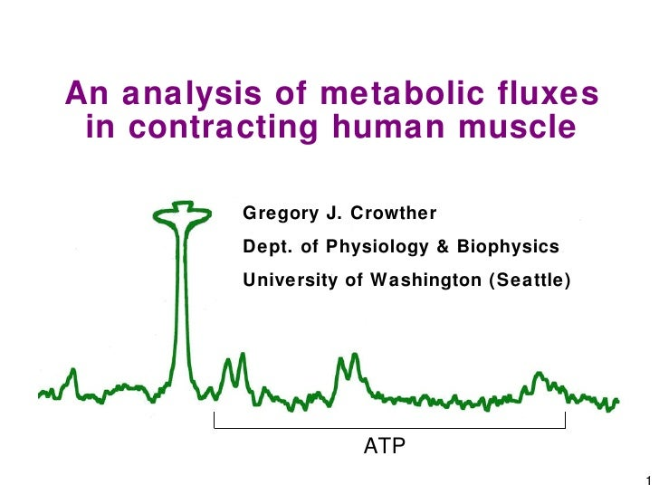 An analysis of metabolic fluxes in contracting human muscle
