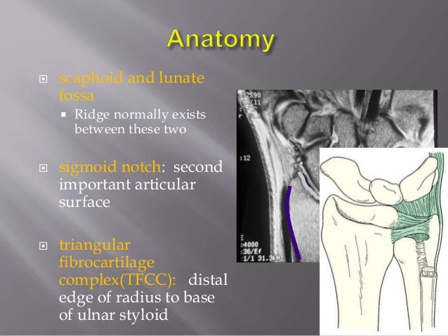 Distal radius anatomy