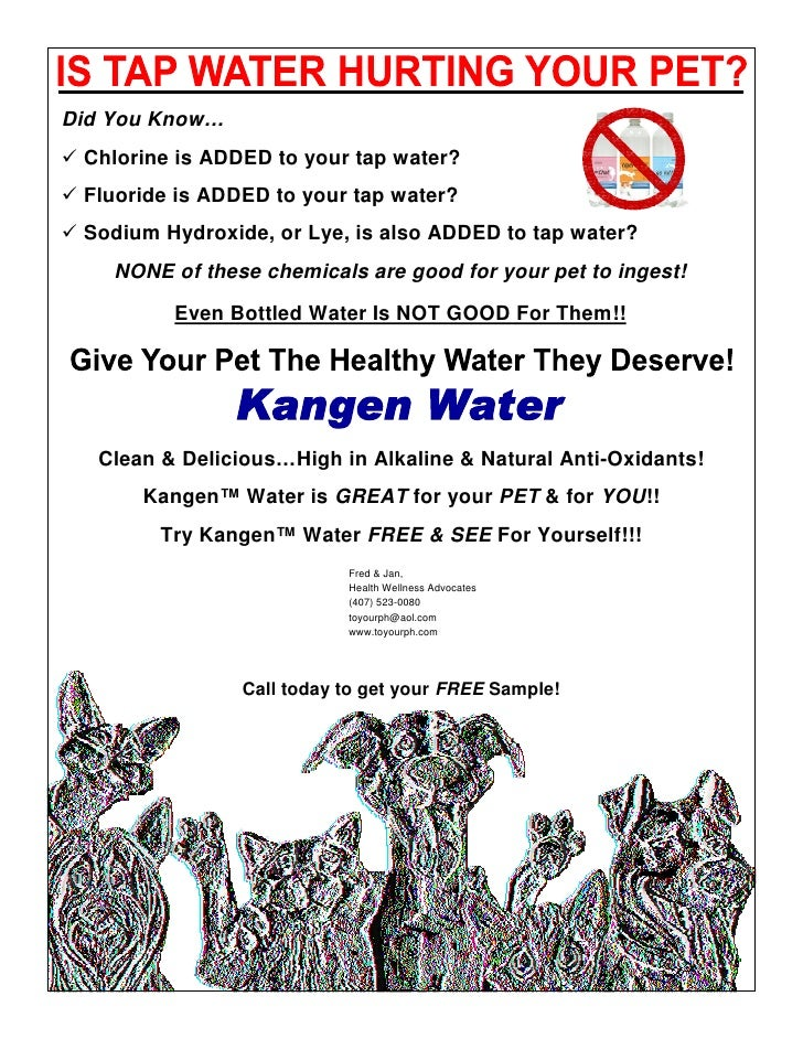 Distributor Pet Flyer