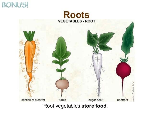 Where Do Cactus Store Their Food