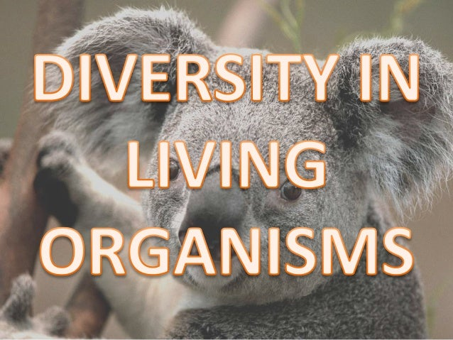 diversity of living organism Diversity in living organism solution of ncert in text questions: question: 1 why do we classify organisms answer:- there are millions of species on this earth.