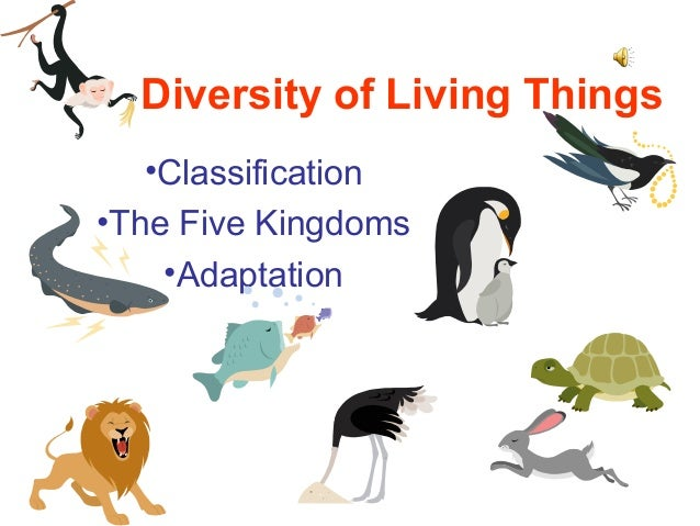 diversity of living things Introduction in this tutorial you will be learning about the linnaean system of classification used in the biological sciences to describe and categorize all living things the focus is on finding out how humans fit within this system in addition, you will discover part of the great diversity of life forms and come to understand why some.