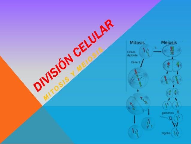 DIVISIÓN CELULAR  La división celular es la parte del ciclo de vida de la célula en la que una célula inicial (que llamam...