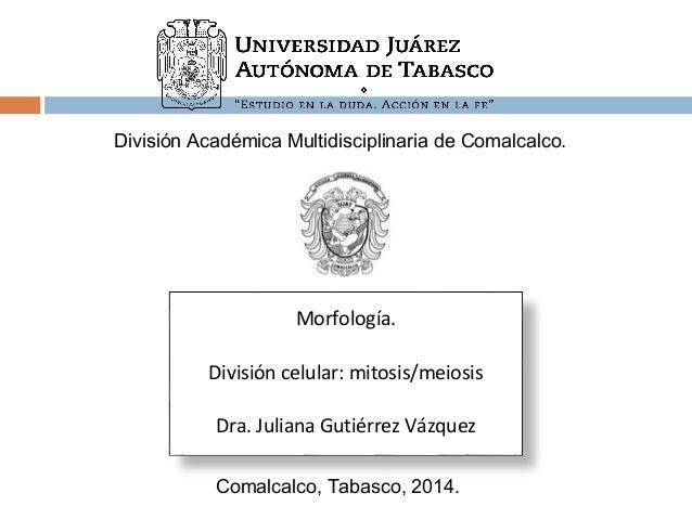 División Académica Multidisciplinaria de Comalcalco.  Morfología.  División celular: mitosis/meiosis  Dra. Juliana Gutiérr...