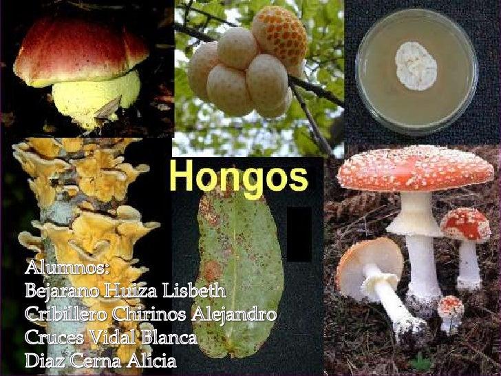 Alumnos:<br />Bejarano HuizaLisbeth<br />Cribillero Chirinos Alejandro<br />Cruces Vidal Blanca<br />Diaz Cerna Alicia<br />