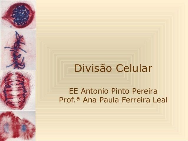 Divisão Celular EE Antonio Pinto Pereira Prof.ª Ana Paula Ferreira Leal