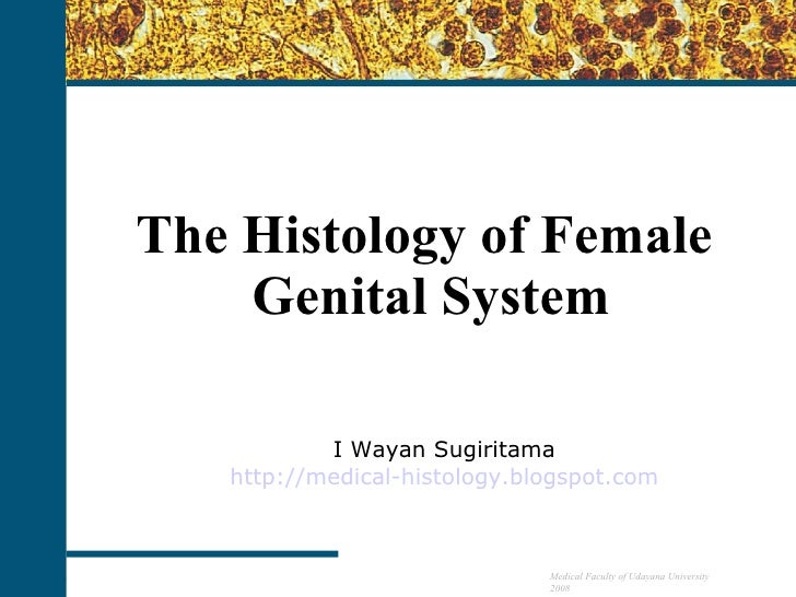 The Histology of Female  Genital System I Wayan Sugiritama http://medical-histology.blogspot.com Medical Faculty of Udayan...