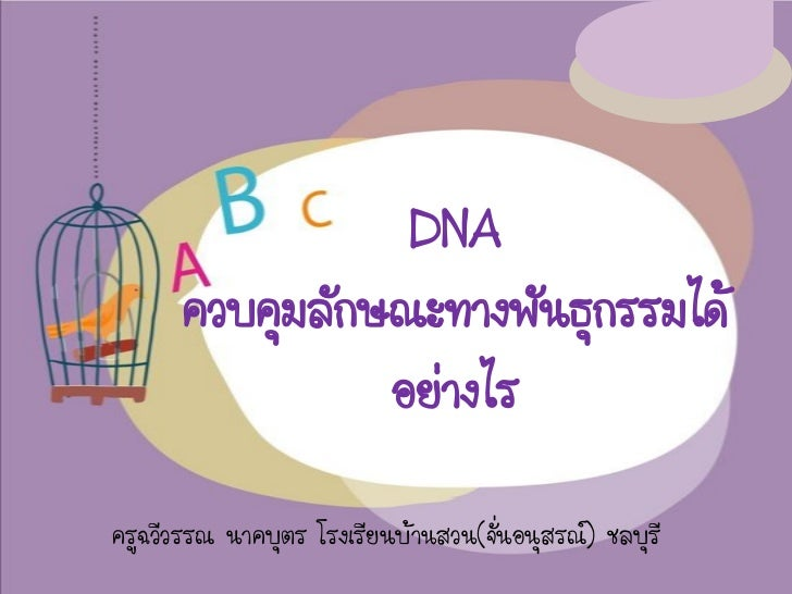 DNA      ควบคุมลักษณะทางพันธุกรรมได้                อย่างไรครูฉวีวรรณ นาคบุตร โรงเรียนบ้านสวน(จั่นอนุสรณ์) ชลบุรี