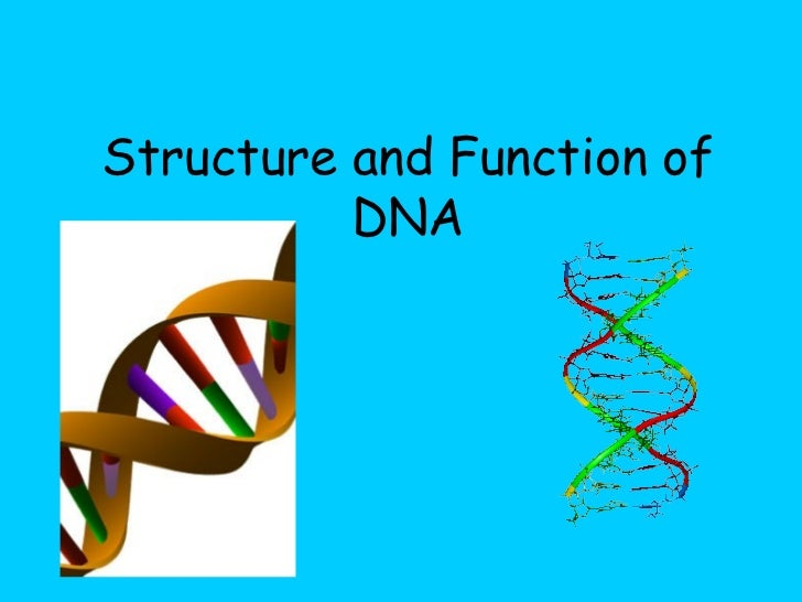 structure of dna an overview On the basis of a structural analysis of 240 protein-dna complexes  and how the dna structure is quite  general overview of the dna-binding.
