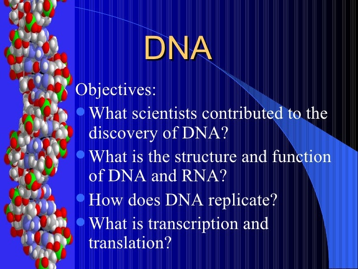 DNA <ul><li>Objectives: </li></ul><ul><li>What scientists contributed to the discovery of DNA? </li></ul><ul><li>What is t...