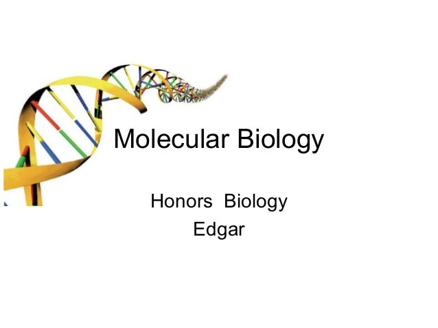 Molecular Biology Honors Biology Edgar
