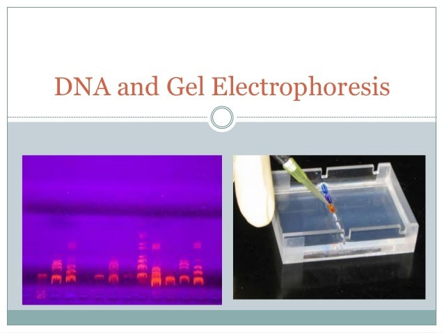 how to run gel electrophoresis