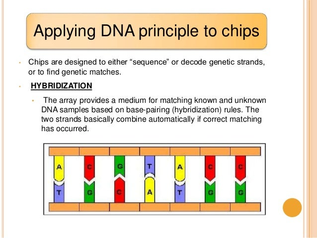 dna microarray research paper Essay on social service as a part of education dna microarray research paper rug master thesis contents of dissertation.