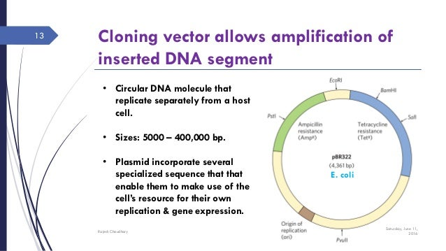 Dna cloning research papers