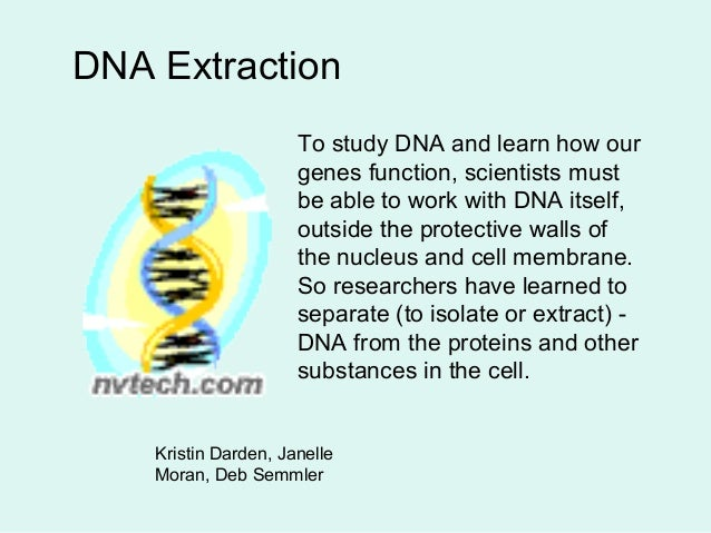 DNA Extraction To study DNA and learn how our genes function, scientists must be able to work with DNA itself, outside the...