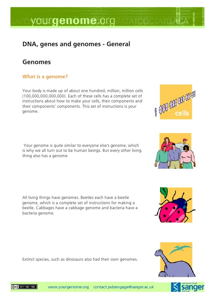 DNA, genes and genomes - General  Genomes  What is a genome?  Your body is made up of about one hundred, million, million ...