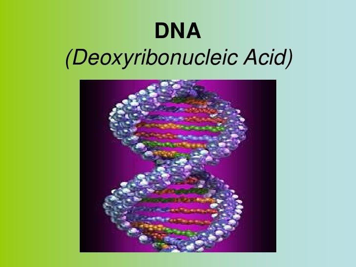 DNA(Deoxyribonucleic Acid)