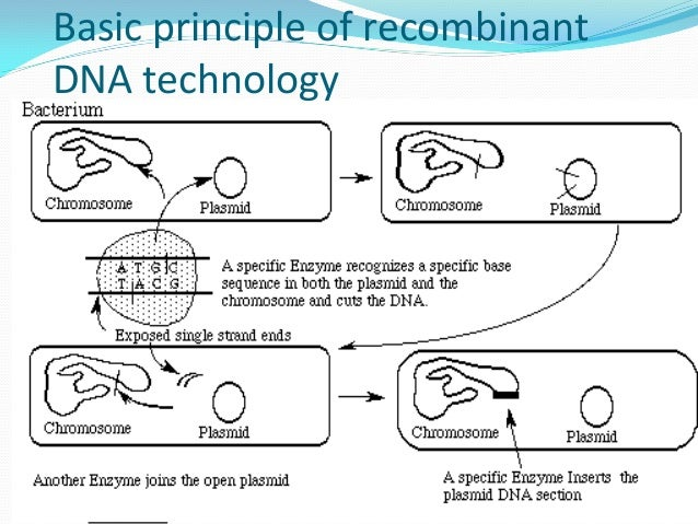 discuss recombinant dna techniques may used correct point I found this interesting paper which may help you out.