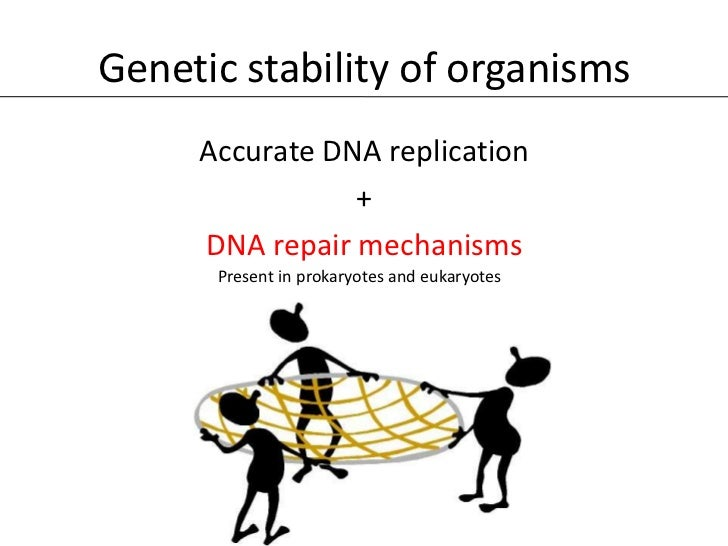 Genetic stability of organisms     Accurate DNA replication                +     DNA repair mechanisms      Present in pro...