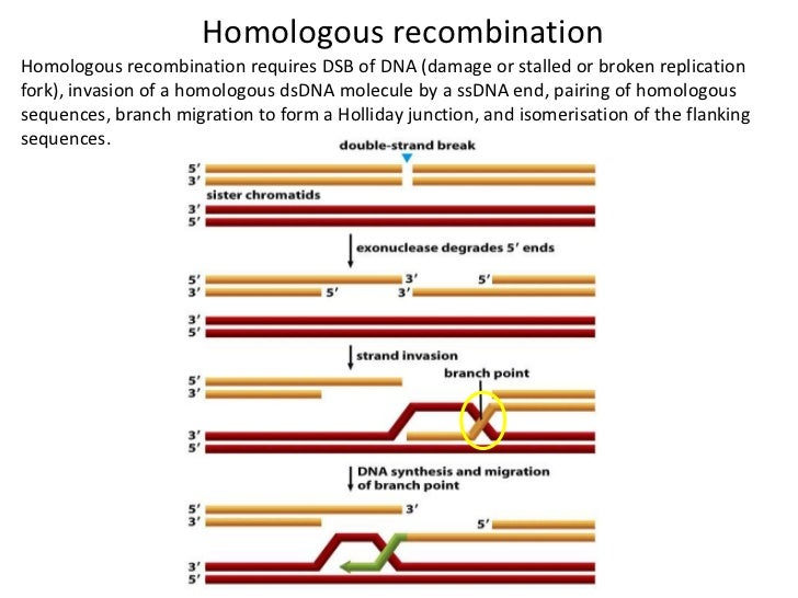 protein synthesis ppt