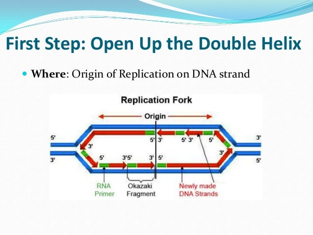 Dna replication review for matching worksheet final