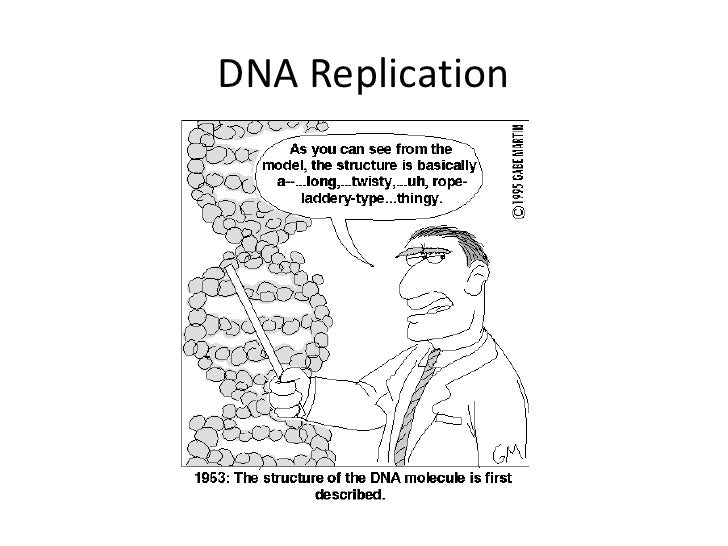 Dna replication ss