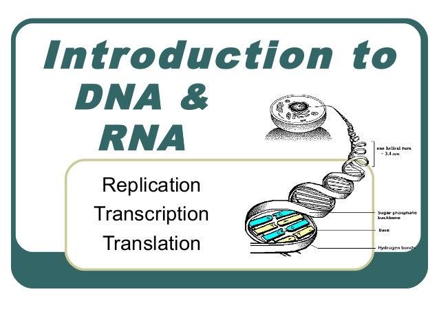 Introduction to DNA &  RNA   Replication  Transcription   Translation