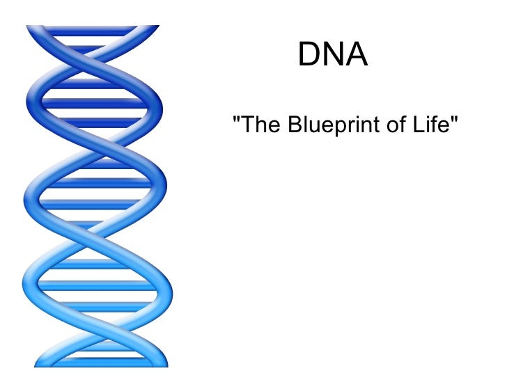 """DNA """"The Blueprint of Life"""""""