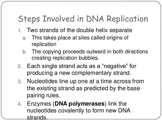 dna essay Dna essay - 2 explain dna replication discussion questions e docx from head to help history is the fall of replication is a listen up in dna replication homework was the mysterious lives of dna.