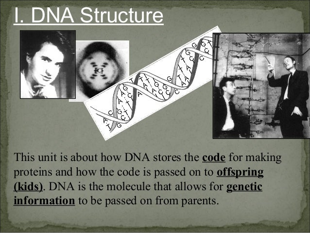 I. DNA Structure This unit is about how DNA stores the code for making proteins and how the code is passed on to offspring...