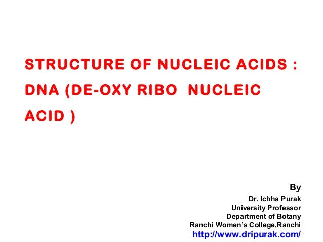 STRUCTURE OF NUCLEIC ACIDS :DNA (DE-OXY RIBO NUCLEICACID )ByDr. Ichha PurakUniversity ProfessorDepartment of BotanyRanchi ...