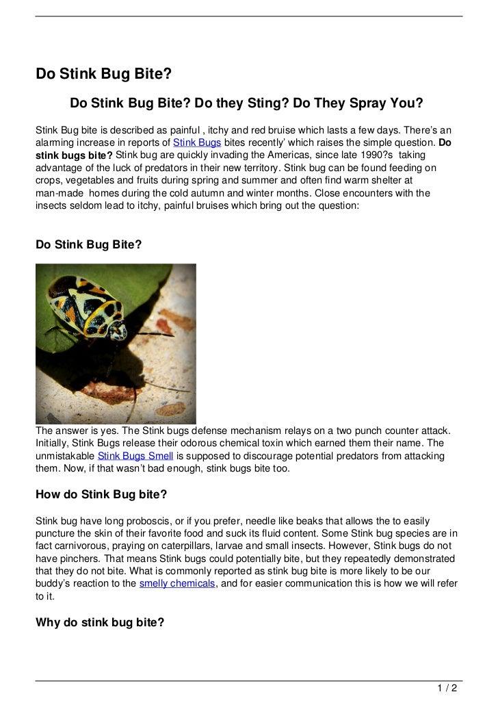 Do Stink Bug Bite?