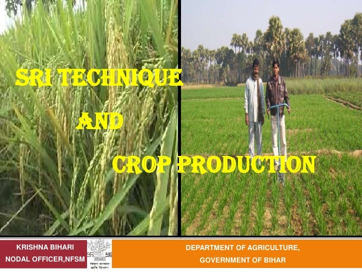 SRI TECHNIQUE                   AND                     CROP PRODUCTION  KRISHNA BIHARI          DEPARTMENT OF AGRICULTURE...
