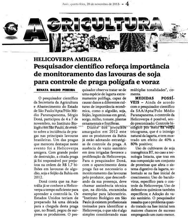 Jornal Voz da Terra - Pragas