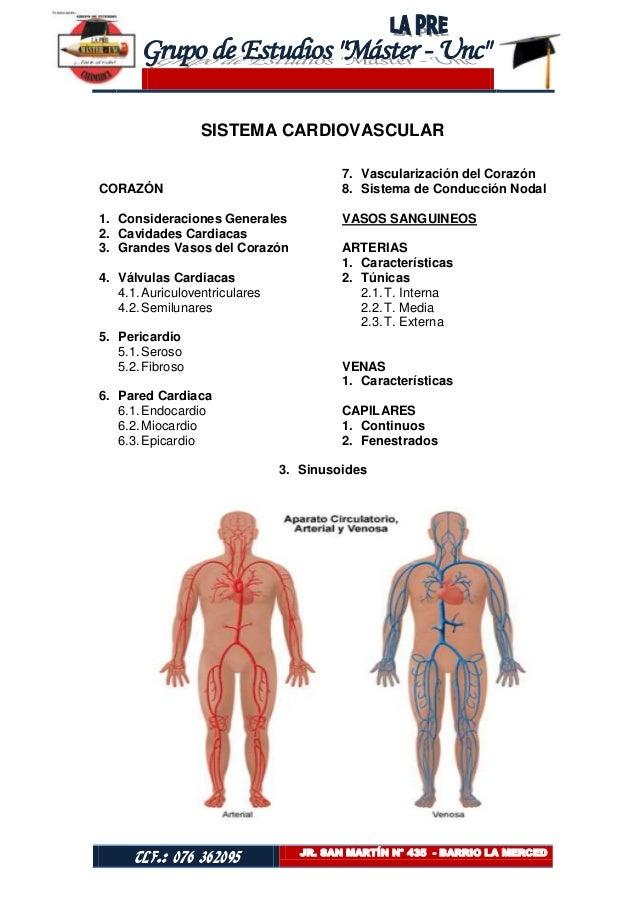 SISTEMA CARDIOVASCULAR                                         7. Vascularización del CorazónCORAZÓN                      ...
