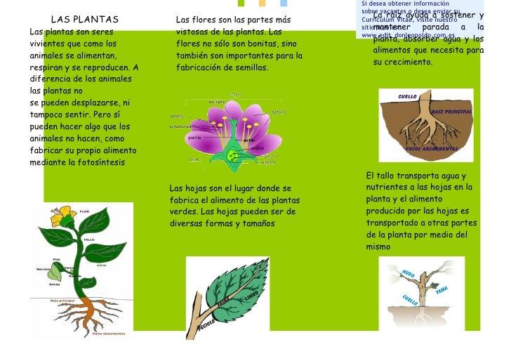 La planta - Todo sobre las plantas ...